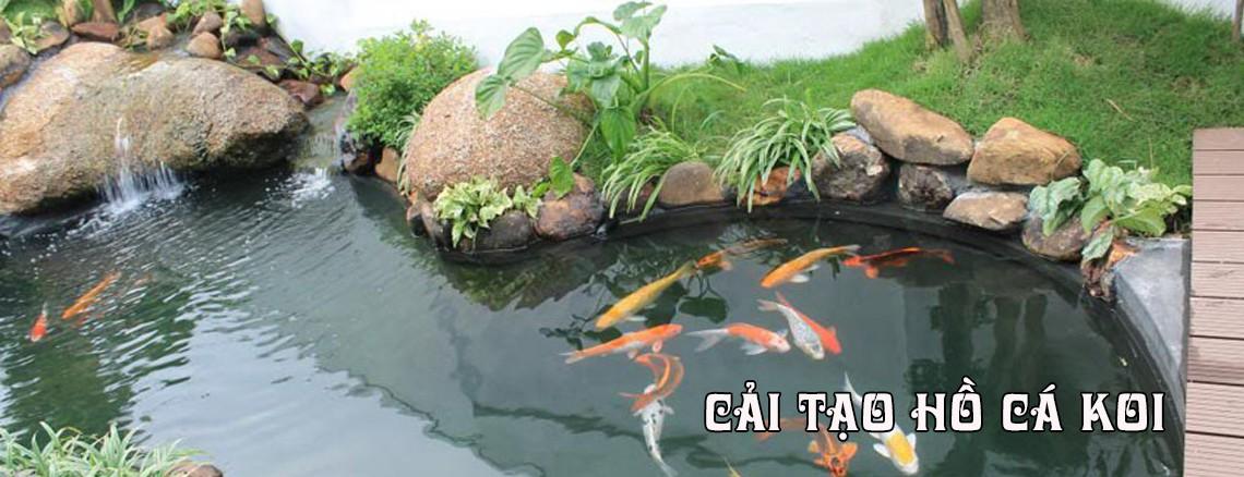 Cải tạo hồ cá coi